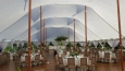 Rental store for 59 x79  Aurora Sheer Top Pole Tent in New Britain PA
